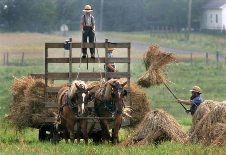 Amische Bauern mit Pferden