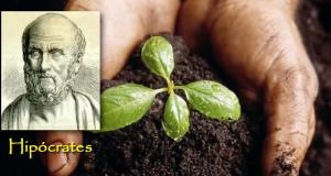 Pflanzen haben Bewusstsein Foto Youtube