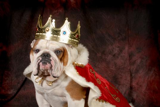 Hund (Bildnachweis: iStock-462239689/WilleCole)